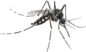 Dengue Treatment in South Delhi
